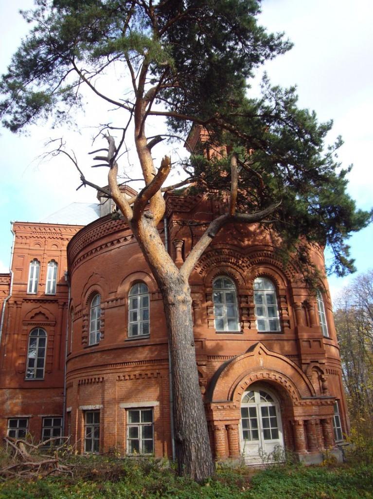 Главный дом, сосна 2011