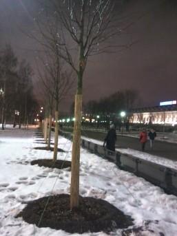 """Александровский сад, """"обновленная"""" аллея"""