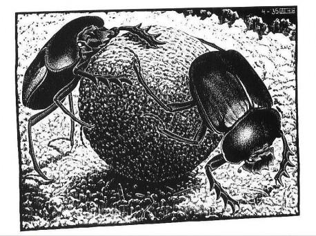 Скарабеи рисунок Мориса Эшера