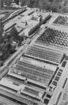 9_1 Растениеводство 1939г. теплицы